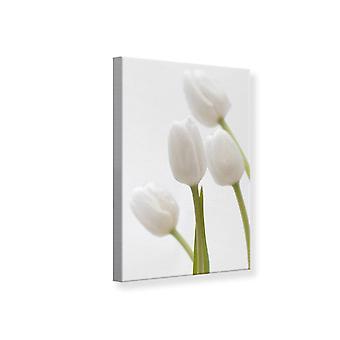 Leinwand drucken weiße Tulpe