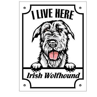 Signe d'étain Irlänsk Varghund Kikande signe de chien