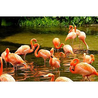 Tapete Wandbild Rosa Flamingos