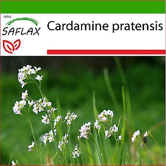 Saflax - 100 zaden - Met grond - Koekoeksbloem - Cardamine des prés - Billeri dei prati - Flor de cuco del prado - Wiesenschaumkraut
