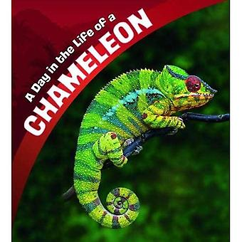 A Day in the Life of a Chameleon (A+ Books: A Day� in the Life)