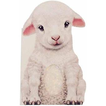 Furry Lamb by Annie Auerbach - 9781438050133 Book