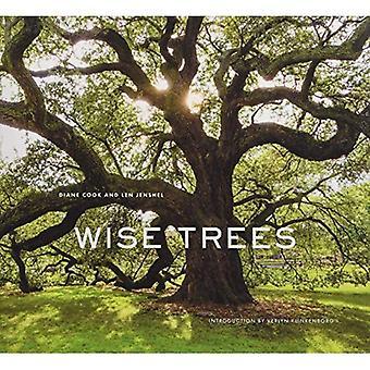 Kluge Bäume