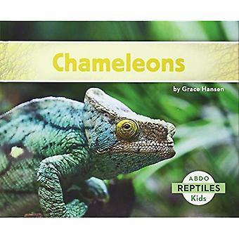 Chameleons (Reptiles)