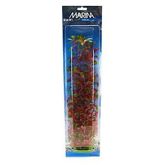 "Marina Red Ludwigia Plant - 20"" Tall"