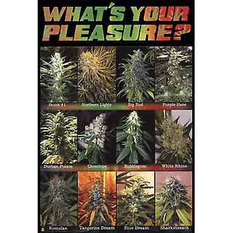 WhatS Your Pleasure Poster Print