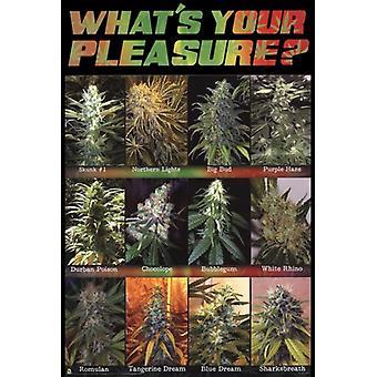 Cuál es tu impresión de póster de placer
