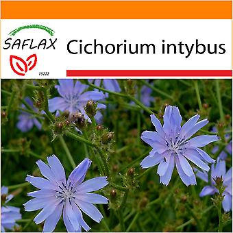Saflax - Garden in the Bag - 250 seeds - Chicory  - Chicorée sauvage - Cicoria comune - Escarola - Wegwarte