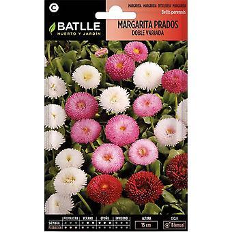 Batlle Bellis Carpet Large Double Flower Mixed (Garden , Gardening , Seeds)