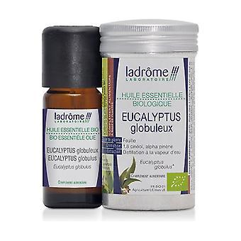 Organic Globulous Eucalyptus essential oil 10 ml of essential oil