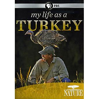 Nature - My Life as a Turkey [DVD] USA import