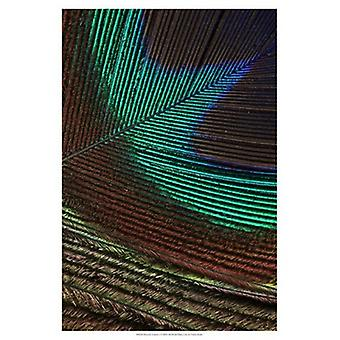 Peacock Feathers I Poster Print by Vision studio (13 x 19)