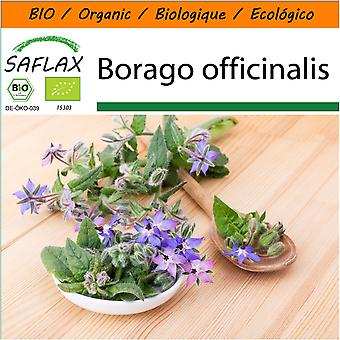 Saflax - Garden in the Bag - 40 seeds - Organic - Borage - BIO - Bourrache - BIO - Borragine  - Ecológico - Borraja - Borretsch