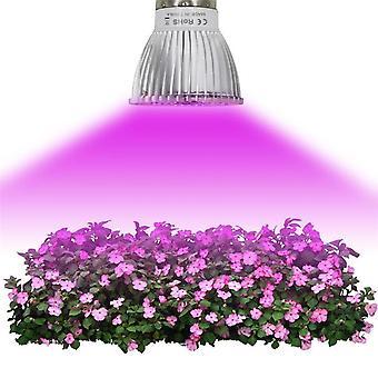 أدى تنمو الضوء الخضار زهرة الزهور في الأماكن المغلقة الزراعة المائية مصباح الطيف الكامل