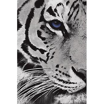 Tiger violetti silmä Juliste Tulosta Jace harmaa