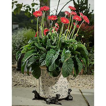 Potty Feet Decorative Boxer Dog Themed Plant Pot Feet Bronze Color - Set of 3