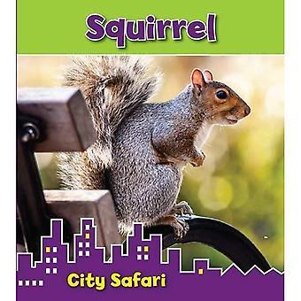 Scoiattolo: Città Safari