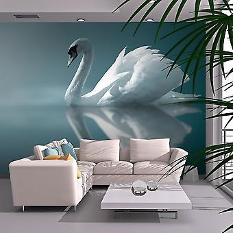 Papier peint animaux - Cygne blanc