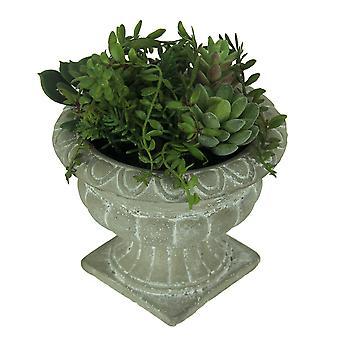Mini Succulent Garden in Cast Stone Grecian Urn Planter