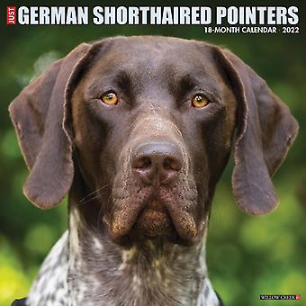 Bara tyska korthåriga pekare 2022 Wall Calendar Dog Breed av Willow Creek Press