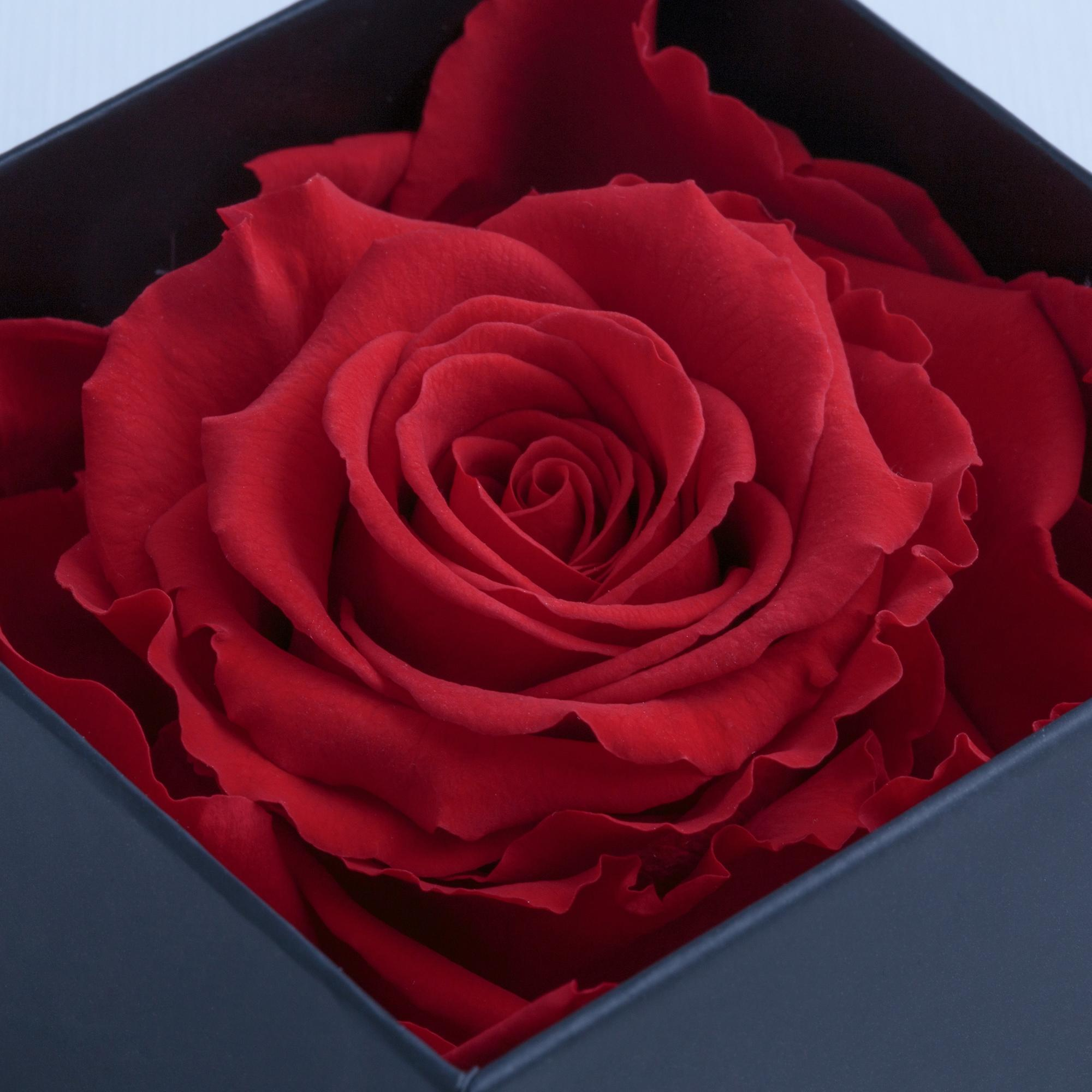Floral arrangement preserved eternal rose gift box - Merci