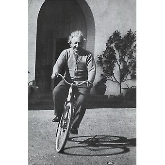 Альберт Эйнштейн - велосипед Плакат Плакат Печать