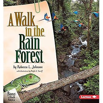 Une promenade dans la forêt tropicale