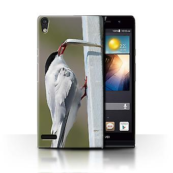 STUFF4 Case/Cover for Huawei Ascend P6/Arctic Bird/Tern/Arctic Animals
