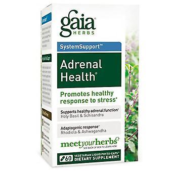 غايا الأعشاب Adrenal الصحة، 60 قبعات