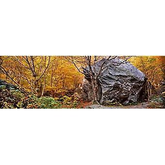 Stora stenblock i en skog Stowe Lamoille County Vermont USA affisch Skriv