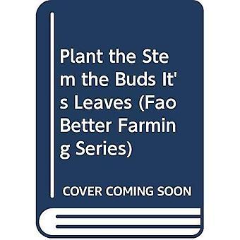 De Plant de stengel de knoppen Bladeren is: de stam, de toppen, de bladeren (FAO beter landbouw serie)