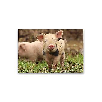 Cute Muddy Baby Knorretje Poster -Afbeelding door Shutterstock