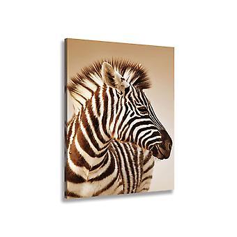 Płyta Zebra i ładne paski