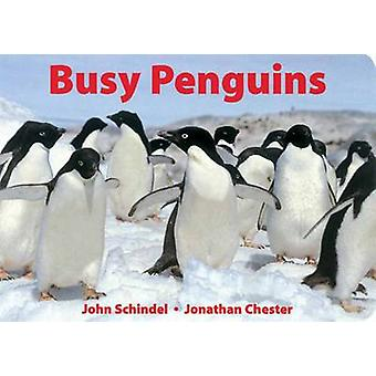 Busy Penguins by John Schindel - Jonathan Chester - 9781582460161 Book