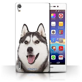 STUFF4 Case/Cover for Huawei Ascend P7 LTE/Husky/Dog Breeds