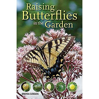 Raising Butterflies in the Garden by Brenda Dziedzic - 9780228102250