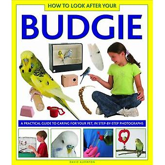 How to Look After Your Budgie - A Practical Guide to Caring for Your P