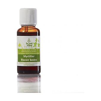 Organic Blueberry Macerate 30 ml
