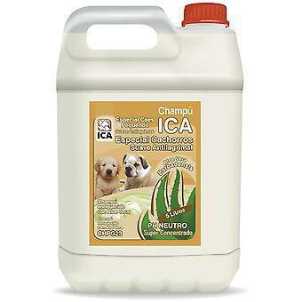 Ica Champú Cachorro Lts Aloe Vera (Perros , Higiene y peluquería , Champús)