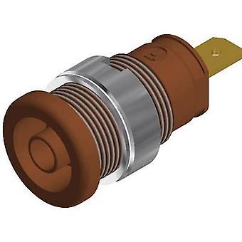 SKS Hirschmann SEB 2610 F4, 8 bezpieczeństwa jack gniazdo Socket, pionowe pionowe średnica sworznia: 4 mm Brązowy 1 szt.