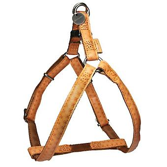 Mac Leather Harness Mac Leather Brown (Dogs , Collars, Leads and Harnesses , Harnesses)