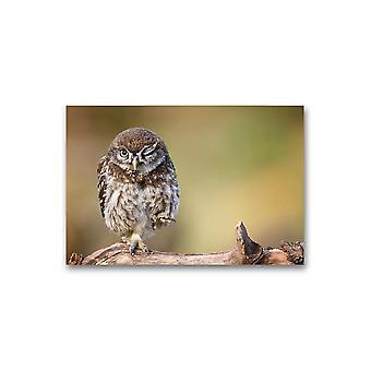 Liten ugle blunkende plakat -Bilde av Shutterstock