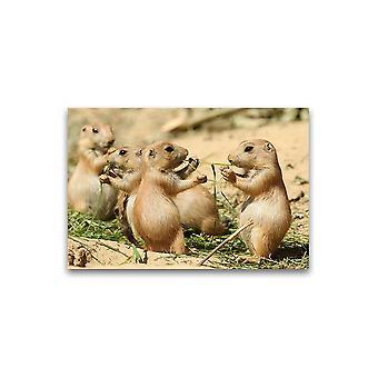 Schattige Prairie Honden Eten Poster -Afbeelding door Shutterstock