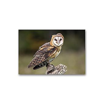 Kanadisk Raptor Barn Owl Poster -Bilde av Shutterstock