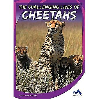 The Challenging Lives of Cheetahs (Stories from the Wild Animal Kingdom)
