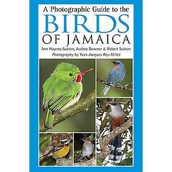 オードリー ダウナー - アン H でジャマイカの鳥の写真案内