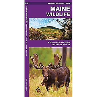Maine Wildlife: An Introduction to Familiar Species (Pocket Naturalist Guides)