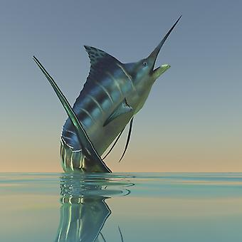 The Blue Marlin is a beautiful predatory fish much sought after by sport fishermen Poster Print