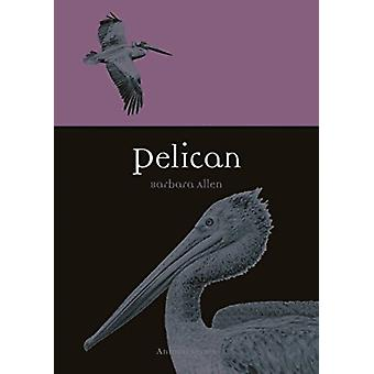 Pelican by Barbara Allen