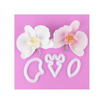 FMM Koi Orkidea
